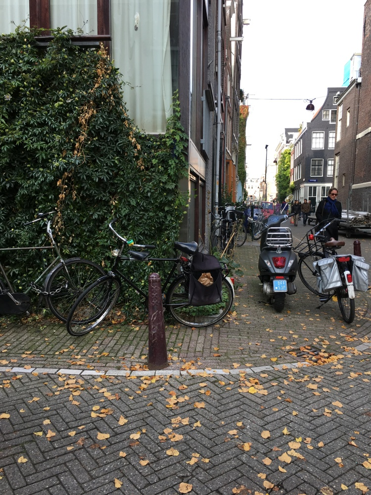 bikes lined up on a fall day in amsterdam